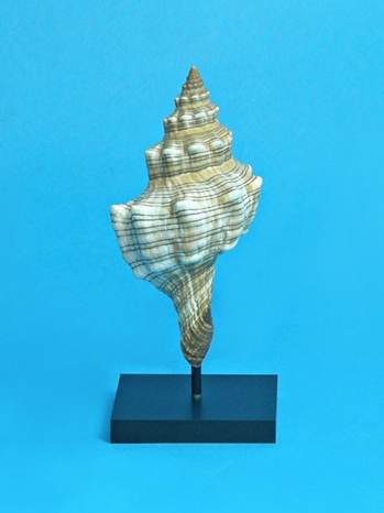 seashell display by ADE